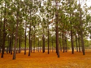 GA trees